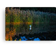 Balloon in the Reeds Canvas Print