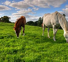 Horses Grazing by Rob Hawkins