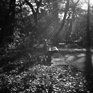 Autumn Rays - Central Park - New York City by Vivienne Gucwa