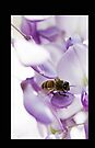 Bee On A Wisteria iPhone by Evita