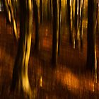 Beech Blur by Anne Gilbert