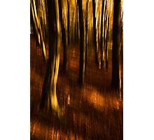 Beech Blur Photographic Print