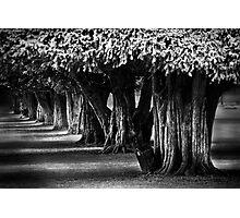 Hampton Court Gardens Photographic Print