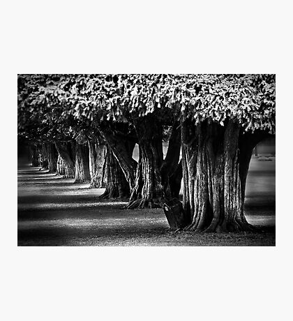 Hampton Court Gardens Photographic Print