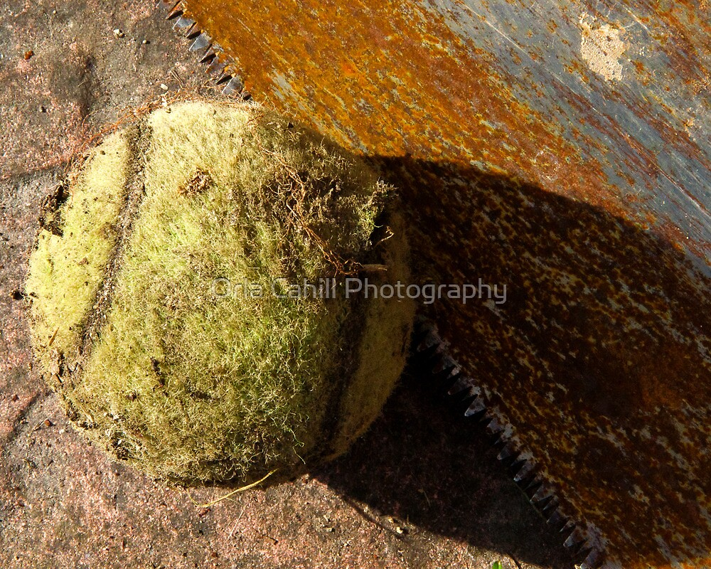 'I Saw A Tennis Ball' by Orla Cahill Photography