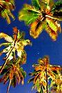 Palms in the full moon light. by Leon Heyns