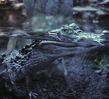 Crocodile by franceslewis
