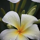 iPhone cover Kauai flower by Candy Gemmill