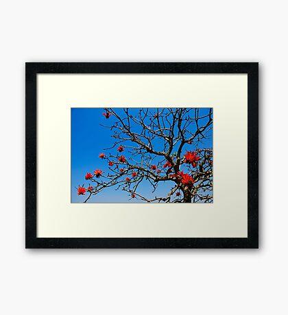 Red-Hot Poker tree in bloom Framed Print