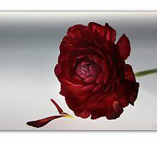 RedBloom by RosiLorz