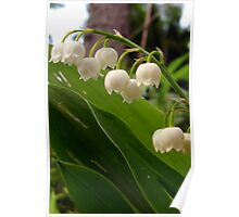 THE LILY OF THE VALLEY Poster