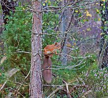 The Squirrel With The Bushy Tail by Jamie  Green