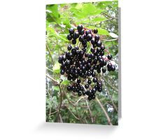 Elderberries Greeting Card