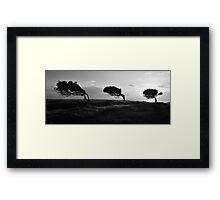 Twisted Trees - Norfolk Island Framed Print