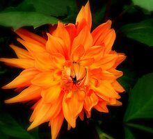 A Touch Of Orange by shelleybabe2