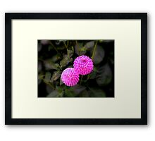 A Touch Of Pinky Purple Framed Print