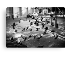 moment of takeoff Canvas Print