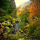 A View Of Fall by Charles &amp; Patricia   Harkins ~ Picture Oregon