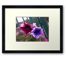 A Soft & Gentle Touch Framed Print