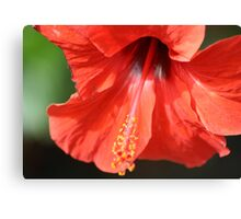 Red Petal and Anther with Pistil of Hibiscus Flower Canvas Print