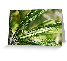 Banksia Brownii Greeting Card