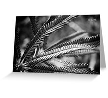 Banksia Brownii Greeting Card