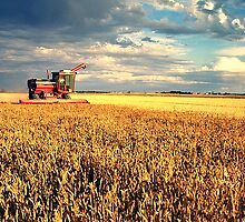 Harvest Time by Grinch/R. Pross