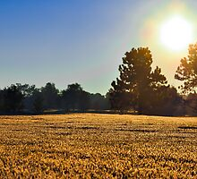 Bright Fall Morning by Reese Ferrier