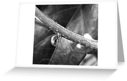 Dew Droplet - Monotone by glennc70000