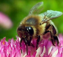 BEE THE BEST by Heidi Mooney-Hill