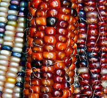 Indian Corn Assortment by Kenneth Keifer