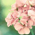 Yesterday's Flower by micklyn