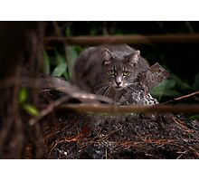 Dont bother me, I'm busy!!!!!!!!! Photographic Print