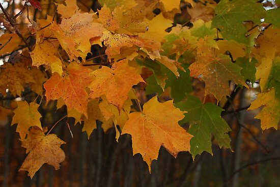 Fall Colors by Thomas Murphy