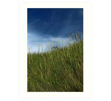 Slope of dune grass Art Print