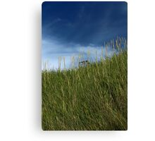 Slope of dune grass Canvas Print