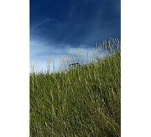 Slope of dune grass Photographic Print