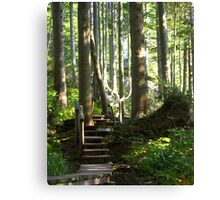 Hiking among Giants Canvas Print