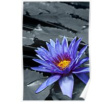 Tropical Waterlily Poster