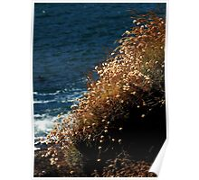 Coastal Nature ~ Part Two Poster