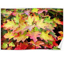 Colourful Leaves Poster