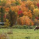 Fall Horse, Lake Ste-Marie, Quebec by Jim Cumming