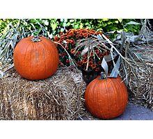 Harvest Pumpkins  Photographic Print