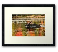 Bull Moose Crossing Creek Framed Print