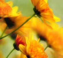Facing The Sunshine  by Jay Morgan