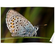Silver Studded Blue Poster