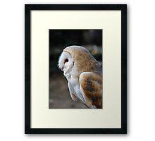 Common Barn Owl Framed Print