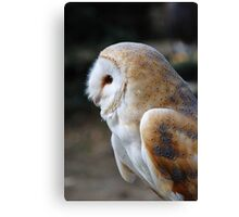 Common Barn Owl Canvas Print