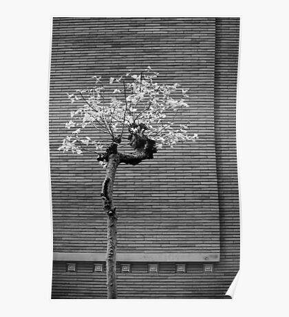 Lloyd Wright in San Francisco Poster
