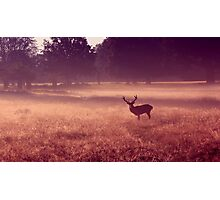 Deer at Dawn Photographic Print